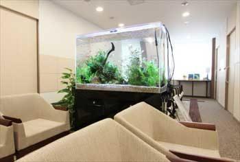 新宿区 検診センターの待合室 90cm淡水魚水槽 設置事例 その後 水槽画像2