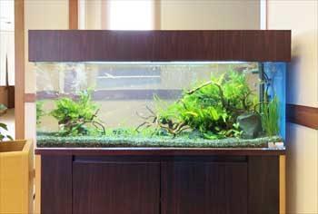 神奈川県 湯河原町 老人ホーム 120cm淡水魚水槽 設置事例 水槽画像2