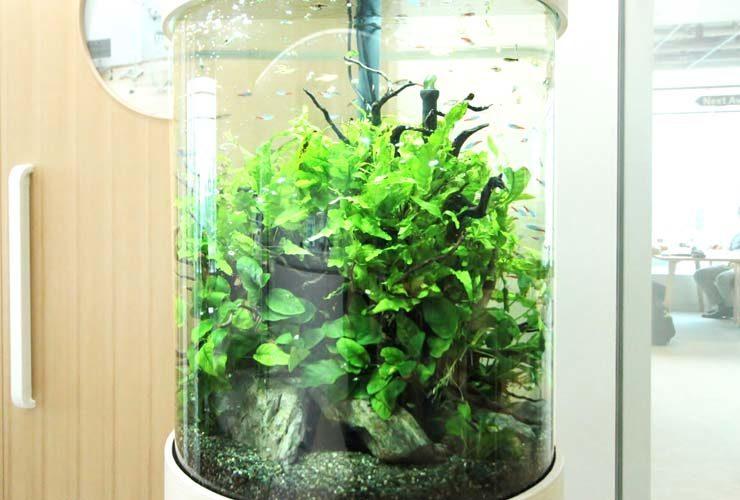 品川区 オフィス事務所 円柱アクアリウム 設置事例 水槽画像2