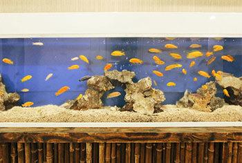 東京都台東区 店舗  420cm埋め込み淡水魚水槽 メンテナンス事例 水槽画像2