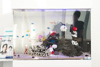 愛知県 眼科クリニックの待合室  90cm海水魚水槽をリニューアル 水槽画像2