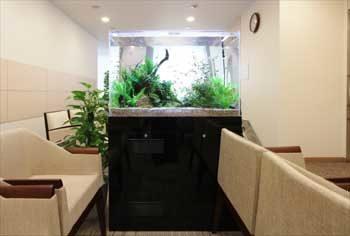 新宿区 検診センターの待合室 90cm淡水魚水槽 設置事例 その後 水槽画像3