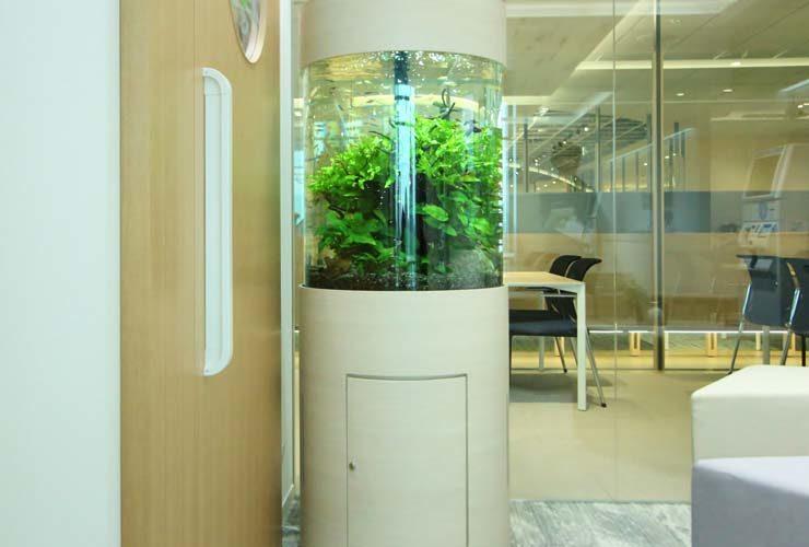 品川区 オフィス事務所 円柱アクアリウム 設置事例 水槽画像3