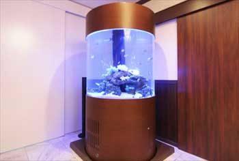 港区 クリニック 大型円柱海水魚水槽 移動事例 水槽画像3
