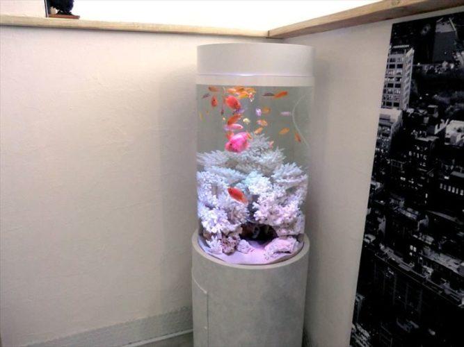 サロン様  45cm円柱淡水魚水槽  設置事例 メイン画像