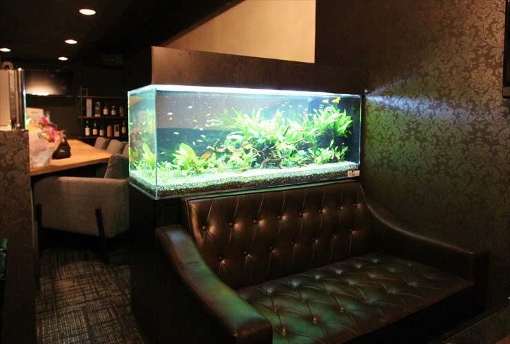 バーの淡水魚水槽