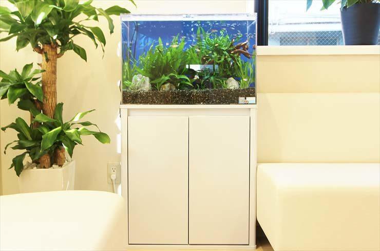 大田区 眼科 待合室 60cm淡水アクアリウム 設置事例 メイン画像