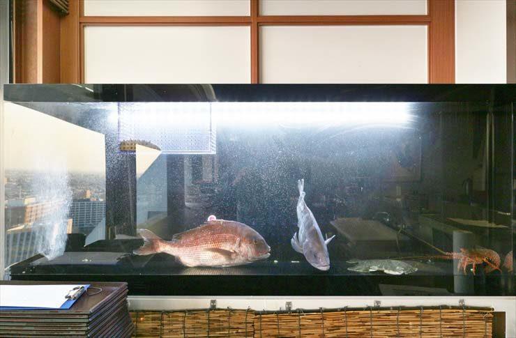 中野区 複合施設 日本料理店 活魚水槽 販売 設置事例 メイン画像