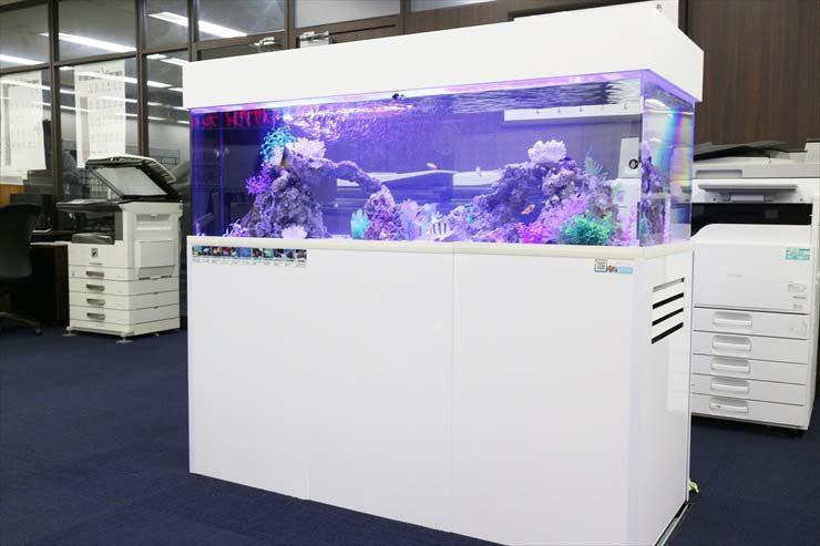 新宿 オフィス アクアリウム 150cm海水魚水槽 設置事例 メイン画像