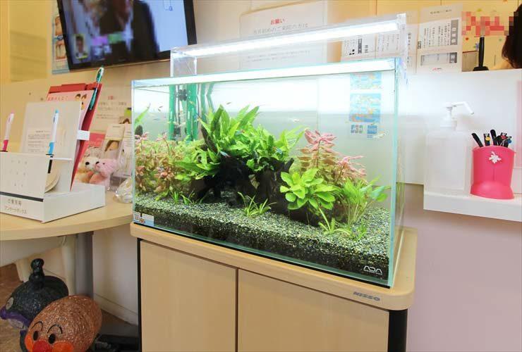 神奈川県 横浜市 歯科クリニック 水槽移設 レイアウトリニューアル事例 メイン画像