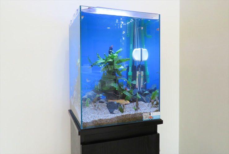 自宅リビングに設置 スタイリッシュ水槽 淡水アクアリウム導入事例 メイン画像