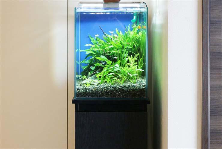 江東区 個人宅のリビングに設置 30cm淡水アクアリウム お試し水槽設置事例 メイン画像