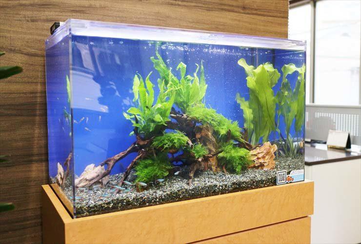 オフィス 応接室に設置 淡水魚水槽 レイアウトリニューアル事例 メイン画像