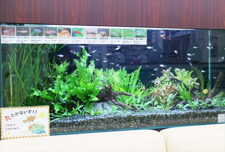 墨田区 薬局の待合室 淡水魚水槽のレイアウトリニューアル事例 メイン画像