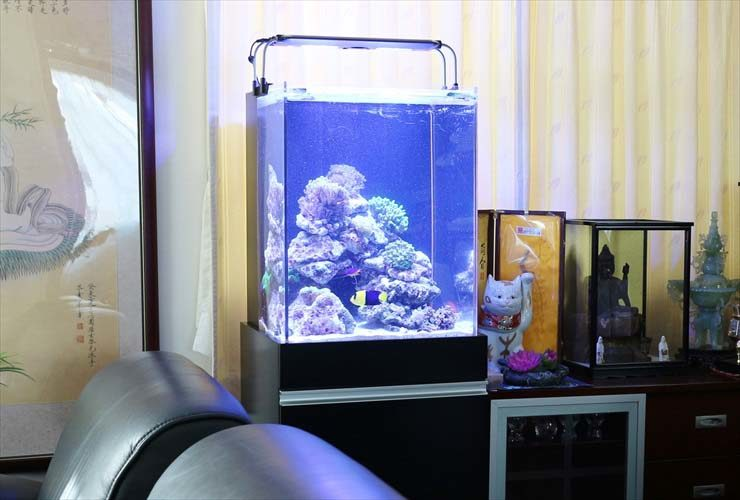 千代田区 企業 社長室に設置 サンゴ水槽 レイアウトリニューアル事例