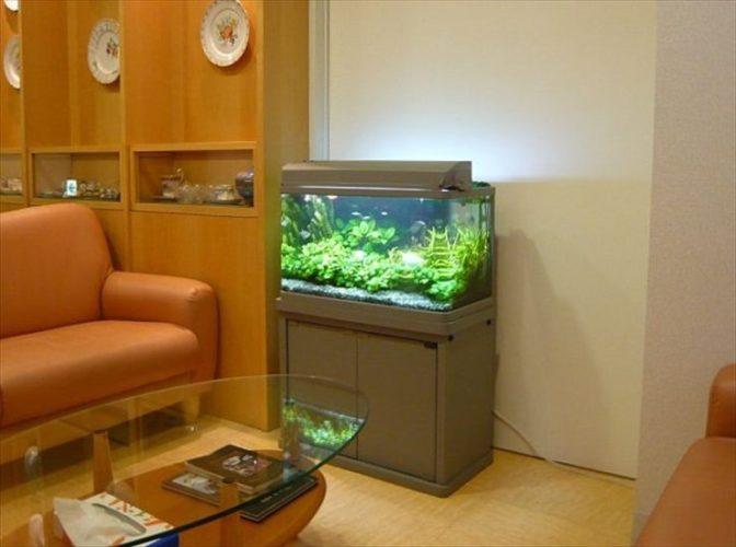 東京都目黒区 クリニック様  60cm淡水魚水槽  設置事例 メイン画像