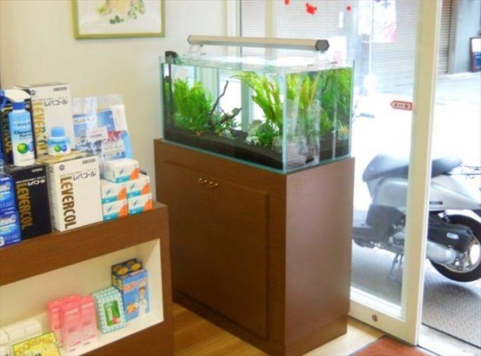 東京都 薬局様  90cm淡水魚水槽  設置事例 メイン画像