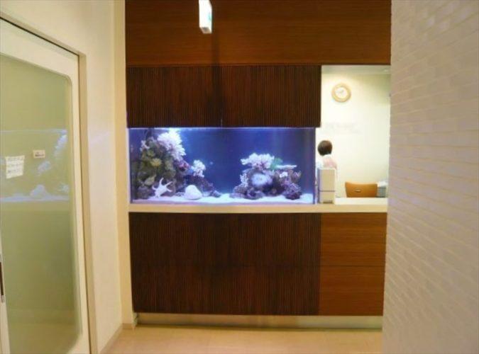 千葉県 産婦人科様  150cm海水魚水槽  設置事例 メイン画像