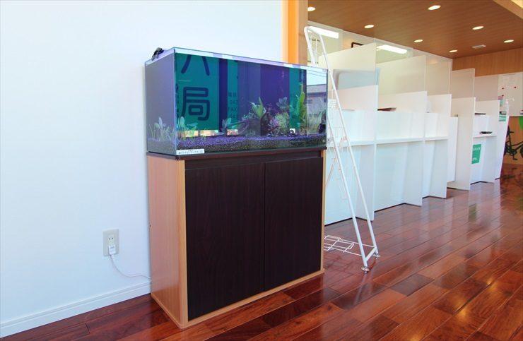 千葉県木更津市 薬局様  90cm淡水魚水槽  設置事例 メイン画像