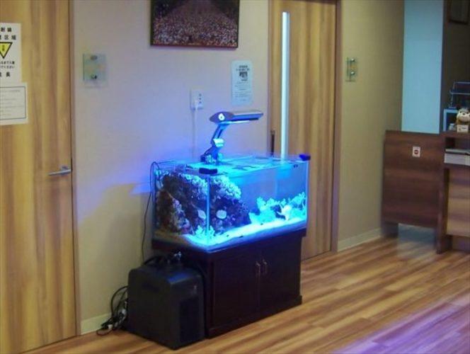 神奈川県川崎市 内科医院様  90cm海水魚水槽  設置事例 メイン画像