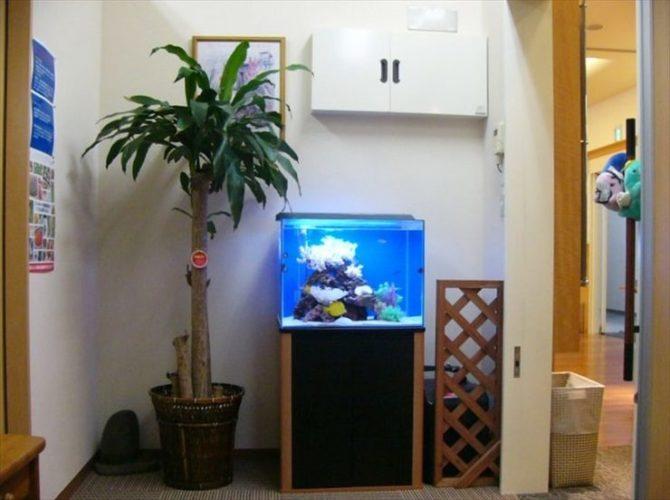 東京都江東区 耳鼻咽喉科様  60cm海水魚水槽  設置事例 メイン画像