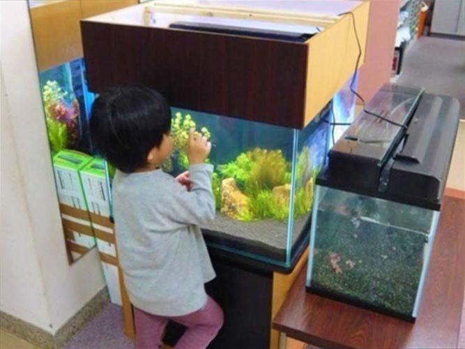 佼成育子園様  水槽設置事例 メイン画像