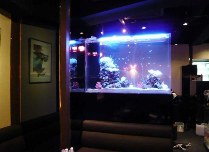 東京都新宿区 飲食店様  150cm海水魚水槽  設置事例 メイン画像