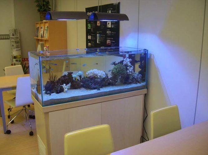 東京都渋谷区 企業様 オフィス  120cm海水魚水槽  レンタル事例 メイン画像
