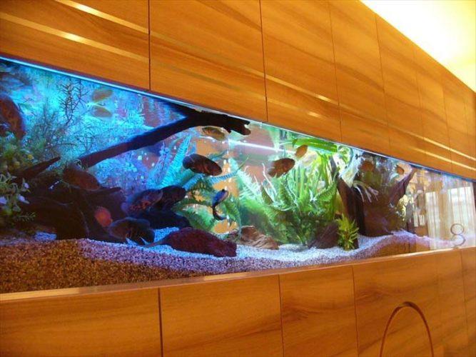 北千住モデルルームの壁面に設置  古代魚の大型アクアリウムの事例 メイン画像