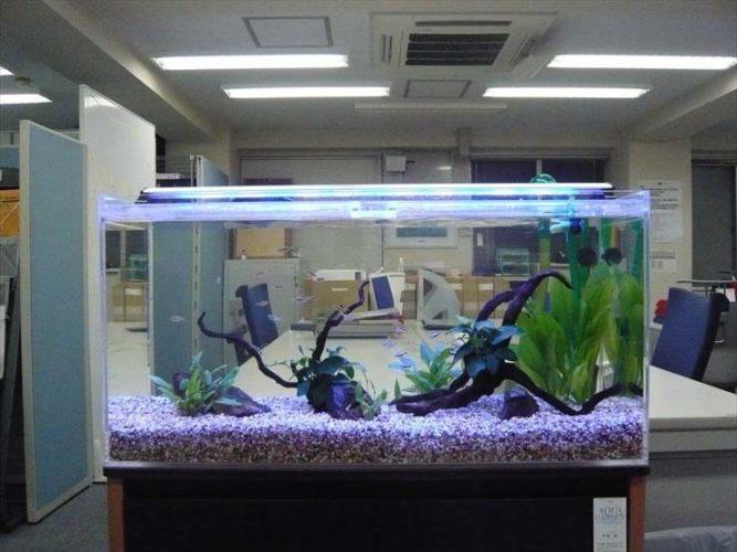 港区 企業様  90cm淡水魚水槽  設置事例 メイン画像