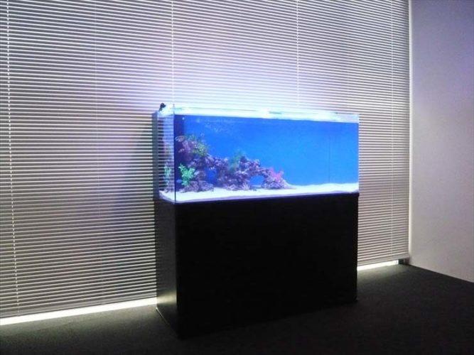 品川区 企業様  120cm海水魚水槽  設置事例 メイン画像