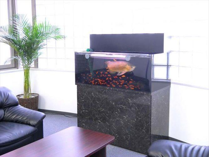 渋谷区 企業様  120cm淡水魚水槽  設置事例 メイン画像