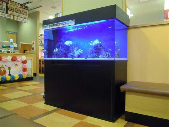 神奈川県川崎市 飲食店様  120cm海水魚水槽  設置事例 メイン画像