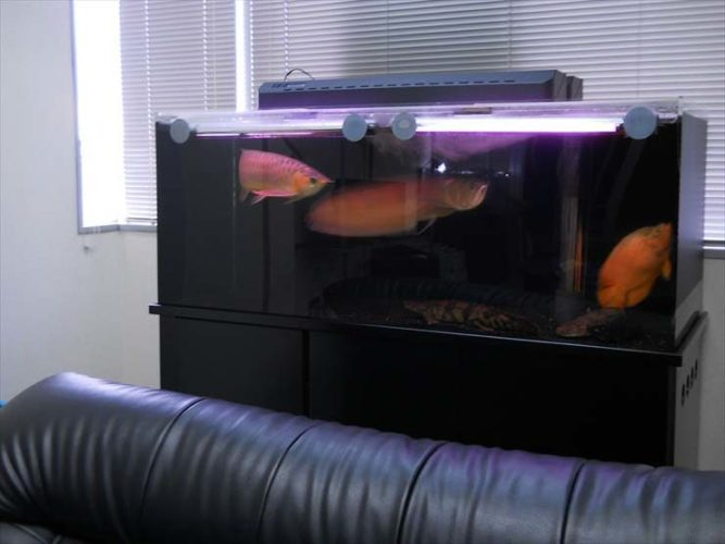 新宿区 企業様  150cm淡水魚水槽  設置事例 メイン画像