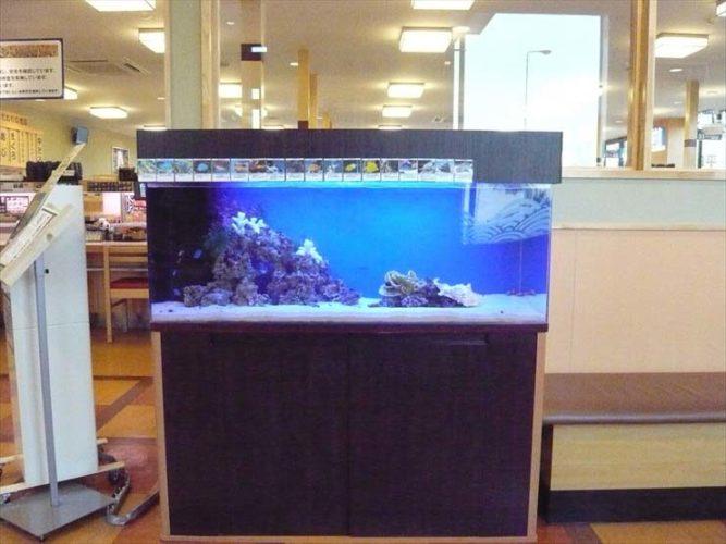 神奈川県厚木市 飲食店様  120cm海水魚水槽  設置事例 メイン画像
