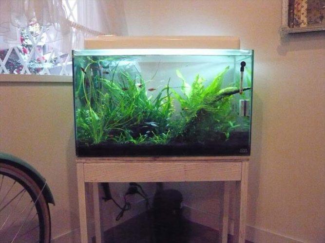 都内 個人宅様  60cm淡水魚水槽  設置事例 メイン画像