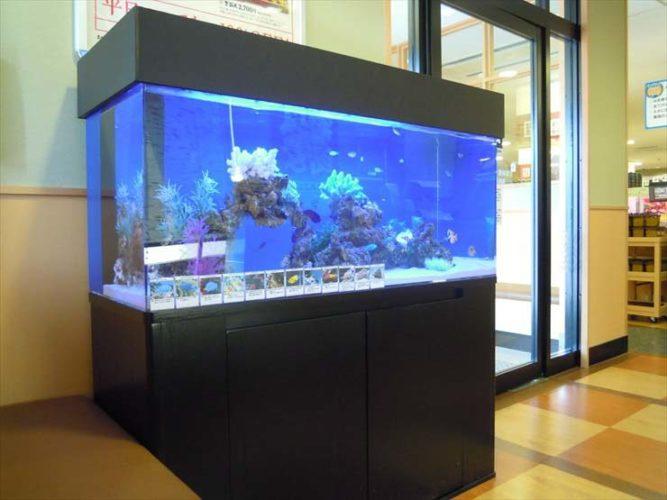 大田区 飲食店様  120cm海水魚水槽  設置事例 メイン画像