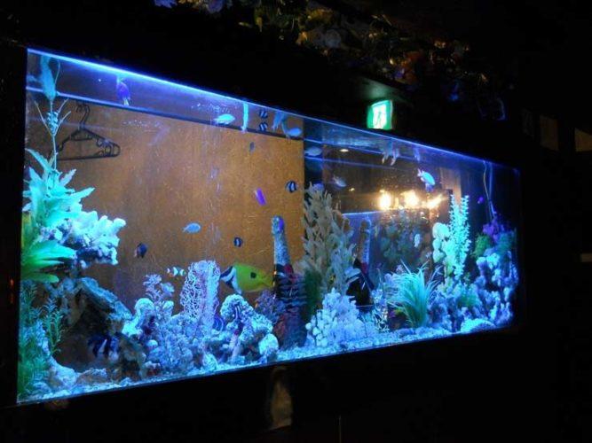 豊島区 飲食店様  150cm海水魚水槽  設置事例 メイン画像