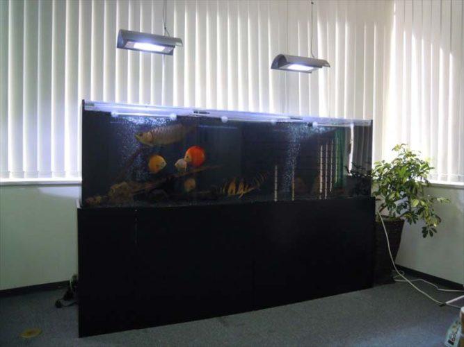 新宿区 企業様  200cm淡水魚水槽  設置事例 メイン画像