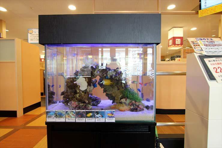 大田区 飲食店様  60cm海水魚水槽  設置事例 水槽画像2