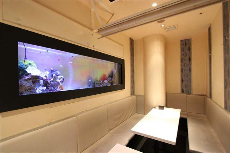 新宿区 飲食店様  150cm海水魚水槽  設置事例 メイン画像
