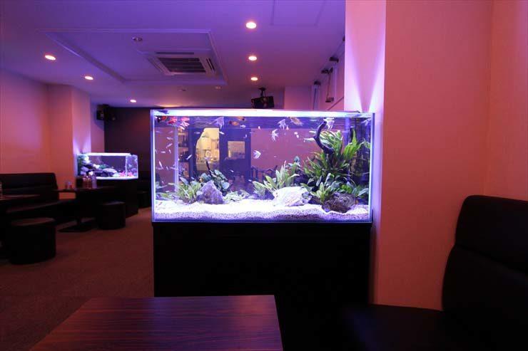 豊島区 飲食店様  90cm淡水魚水槽  設置事例 水槽画像2