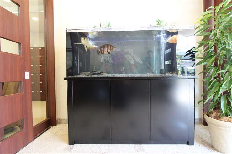 埼玉県さいたま市 介護施設様  150cm淡水魚水槽  設置事例 水槽画像2