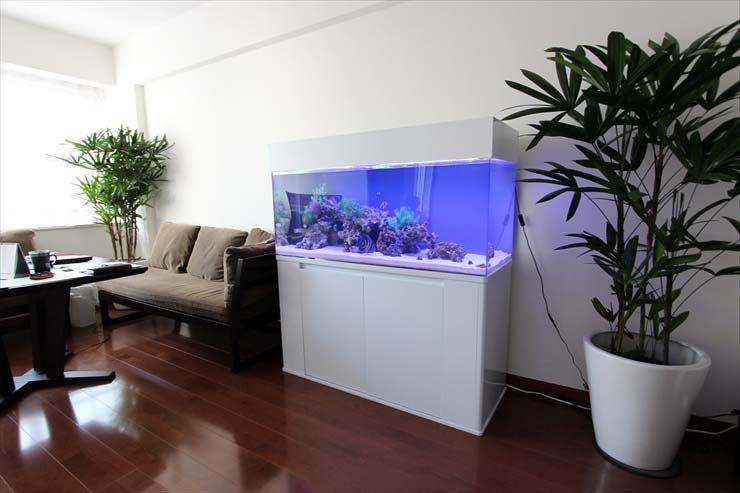 港区 企業様  120cm海水魚水槽  設置事例 メイン画像
