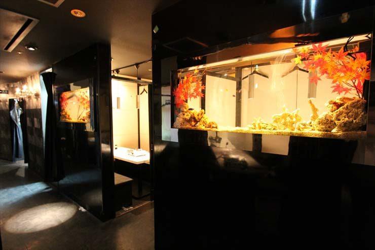 渋谷区 飲食店様  水槽設置事例 メイン画像