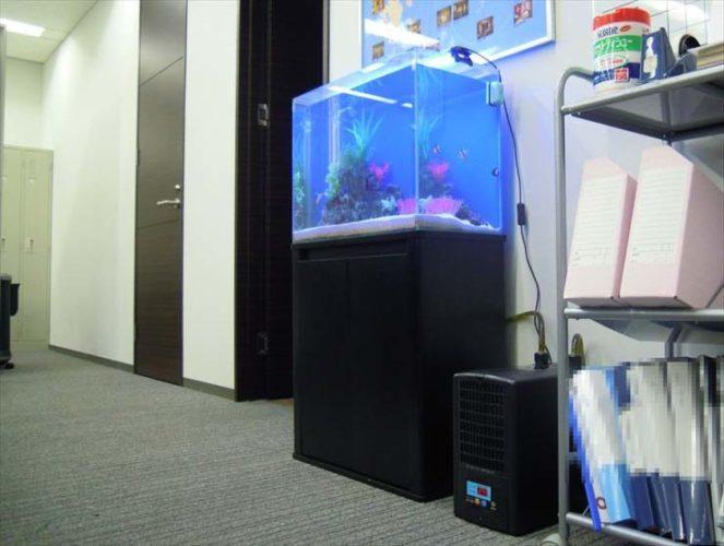 神奈川県横浜市 企業様  60cm海水魚水槽  設置事例 メイン画像