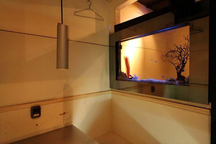 上野 飲食店様  60cm海水魚水槽  設置事例 メイン画像