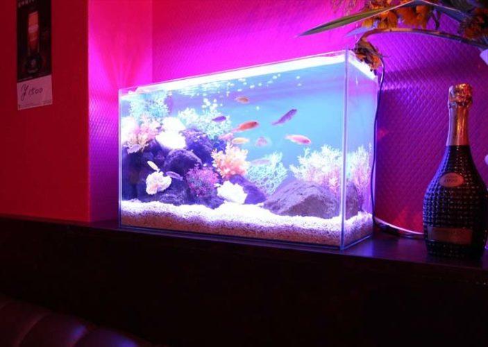 渋谷区 飲食店様  60cm淡水魚水槽  水槽レンタル事例 メイン画像