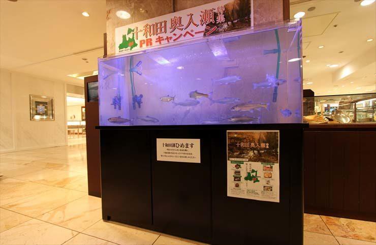 柏 高島屋  短期イベント  水槽設置事例 メイン画像