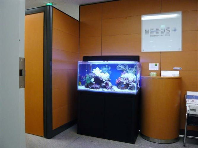 東京都千代田区 企業様  90cm海水魚水槽  設置事例 メイン画像